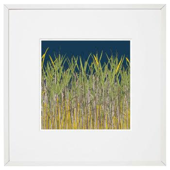 Corn Fields, Birchington on Sea by Rebecca Thomas