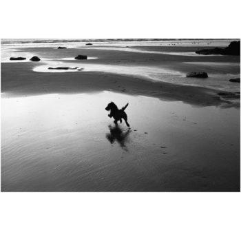 Amy on the Beach by Sarah Wyld