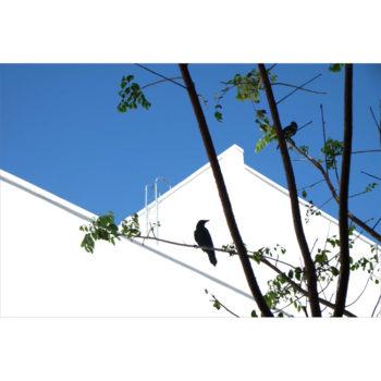 Black Birds by Eleanor Marriott